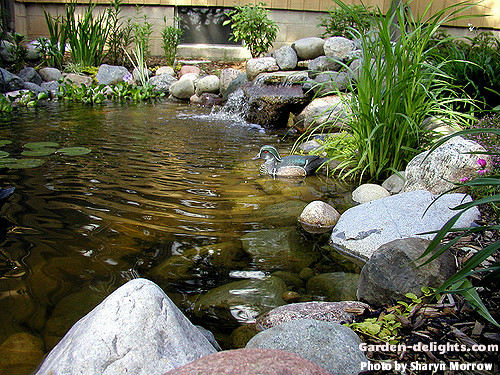 Building a backyard pond design size pond building garden for Garden duck pond design