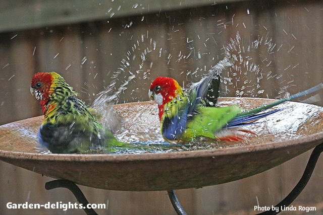 Two Amazing Multicolor Birds Splashing In A Stone Fibergl Birdbath Basin With Wrought Iron Stand
