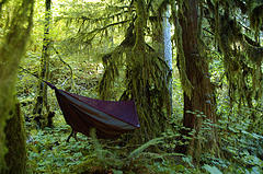 Covered Hammock with netting in woods,Covered Hammocks,Hammocks.