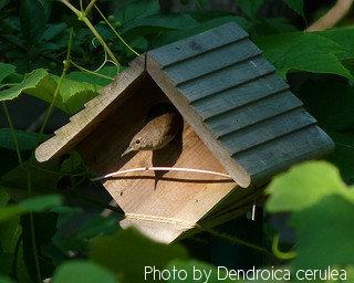 House Wren Bird Houses Safe Decorative Wooden Birdhouse Solution