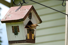 House Wren birdhouse Hung on Rot iron hook white with red roof,House Wren plans,House Wren tips.