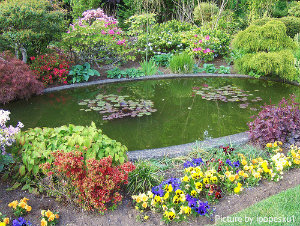 Large oval pond with floating lily accents and surrounding vegetation with stonework edging, garden pond maintenance, outdoor pond cleaning tips.