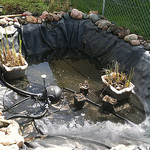 Backyard pond maintenance tips, garden pond care, pond cleaning answers, outdoor pond maintenance.