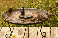 Birds Hanging Around Decorative Metal Solar Birdbath Fountain, Birdbath Solar  Fountains, Solar Powered Water